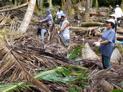 Restoration work on Barton Point; coconut removal