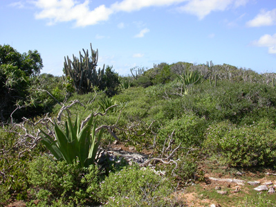 Dry scrub vegetation on Anegada, BV