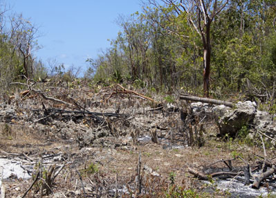 Loss of dry forest habitat, Cayman Brac