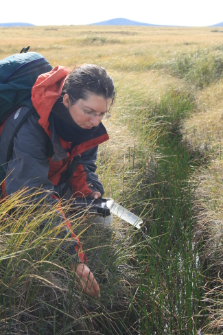 Falklands Conservation officer recording a population of the rare sedge, Carex magellanica on West Falkland