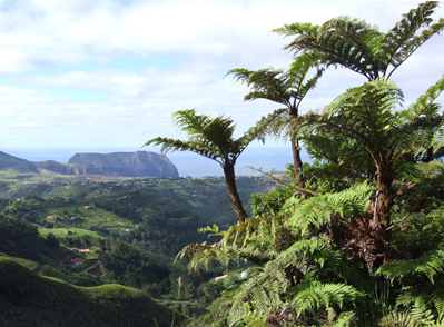 A view across the Island from the Peaks National Park with the endemic St. Helena tree fern, Dicksonia arborescens in the  foreground